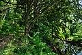 矢川緑地 - panoramio (24).jpg
