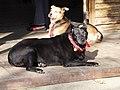黃與黑 Black ^ Tawny - panoramio.jpg