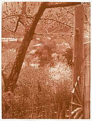 -View from Hillside Through Trees Towards a Valley- MET DP136248.jpg