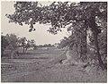 -Wisconsin Landscape- MET DP113871.jpg