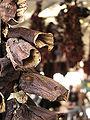 01v getrocknete Pflanze.jpg