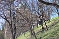 03 2019 photo Paolo Villa - F0197941 - Esztergom - Cattedrale - Esterno - alberi - Dome of the Esztergom Cathedral (exterior).jpg