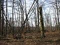 05-04-03-plagefenn-by-RalfR-45.jpg