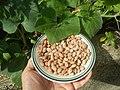 0682Pinto bean textures 05.jpg