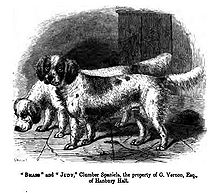 "Two spaniel-like dogs drawn in black and white. Text below the image reads - ""Brass"" and ""Judy,"" Clumber Spaniels, the property of G. Vernon, Esq., of Hanbury Hall"