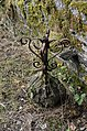 1140743-IronOrnament.jpg