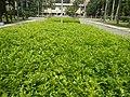 120Mehan Garden Ermita Manila 18.jpg