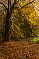 15-11-01-Kaninchenwerder-RalfR-WMA 3299.jpg