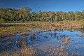 15-30-146, wetlands - panoramio.jpg