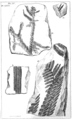 1847 BostonJournal NaturalHistory v5 illus8.png