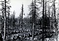 1934. Glass Mountain Unit. Area Northwest of Timber Mountain logged by Shaw-Bertram in 1933. Surviving green trees cut, leaving dead forest of snags. Modoc National Forest, California. (38221477641).jpg