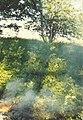 1996-1997, Ефремовский район.jpg