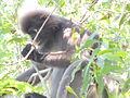1 Monkey 8.JPG