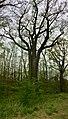 2-Naturdenkmal-Eichen-im-NSG-Lienewitz-Caputher-Seen-und-Feuchtgebietskette.jpg