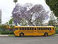 2000s International School bus LAUSD.jpg