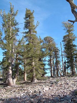 Sugarloaf Mountain (San Bernardino County, California) - Image: 2004 0517SBMts 0010