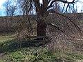 2007Isarauen Unterföhring 06.jpg