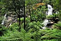 20100102 Triplet Falls - Otway Ranges - Victoria - Australia.JPG