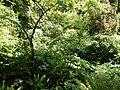 2015-05-27 Paris, Jardin des plantes 18.jpg