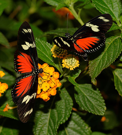 2015-10-24 13-19-34 papillon-hunawihr.jpg