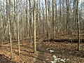 2016-02-08 12 36 11 View north along the Gerry Connolly Cross County Trail between Miller Heights Road and Vale Road in Oakton, Fairfax County, Virginia.jpg