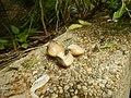 4087Ants Common houseflies foods delicacies of Bulacan 53.jpg