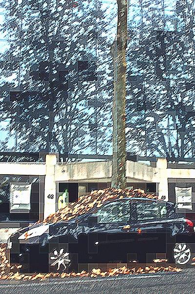 File:42 drop those leaves on home.jpg