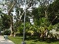 71Mehan Garden Ermita Manila Universidad de Manila 03.jpg