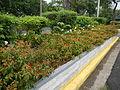 8095jfQuezon Memorial Circle City Monumentfvf 23.JPG