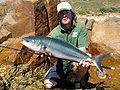 23 / Australian salmon