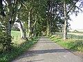 A beech avenue - geograph.org.uk - 244814.jpg