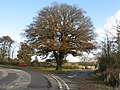 A fine oak - geograph.org.uk - 1562334.jpg