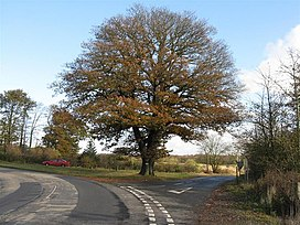 A fine oak - geograph.org.uk - 1562334.jpg