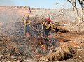 A firefighter uses a drip torch to light a vegetation pile in upper Courthouse Wash. These piles are accumulations of plant (ea44740b-49b1-41e5-9703-128388d310e4).jpg
