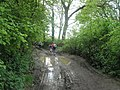 A muddy way ahead for the Wessex 100 Long Distance Walkers - geograph.org.uk - 1324360.jpg