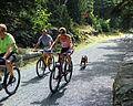 Acadia Carriage Path Bicycles.JPG