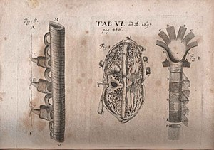 Philip Verheyen - Illustration of critique of Corporis humani anatomia... published in Acta Eruditorum, 1693