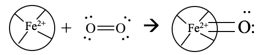 Active site of tetrapyrrol ring binding oxygen