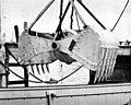 Addresses delivered at the convention of the National Shellfisheries Association (v. 1951) (16585438468).jpg