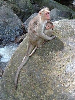 Affectionate Monkey.jpg