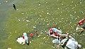 AfterFireworksPlanktonicCyanobacteriaInflorescenceLille2012 03.JPG