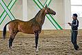 Ahal Velayat Hippodrome - Flickr - Kerri-Jo (134).jpg