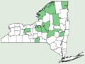 Allium schoenoprasum NY-dist-map.png
