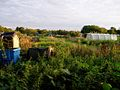 Allotments off Perne Road - geograph.org.uk - 44551.jpg