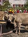 Alpabfahrt Mels. 2007-09-08 13-16-38.jpg
