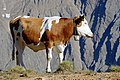 Alpy, Itálie, Rakousko, imgp3026 (2015-08).jpg