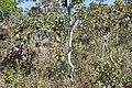 Alto Araguaia - State of Mato Grosso, Brazil - panoramio (474).jpg