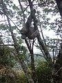 Amigos que encontramos no Pico da Tijuca.jpg