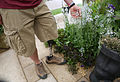Amputee Soldier with Prosthetic Limb at the Chelsea Flower Show MOD 45157832.jpg