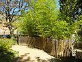 Anduze Cordeliers Bamboos 2870.JPG
